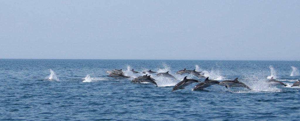 Dolfijnen spotten op de Ionische Zee