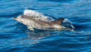 Dolfijnen spotten Taranto - vanuit B&B Villa Lavanda onvergetelijk