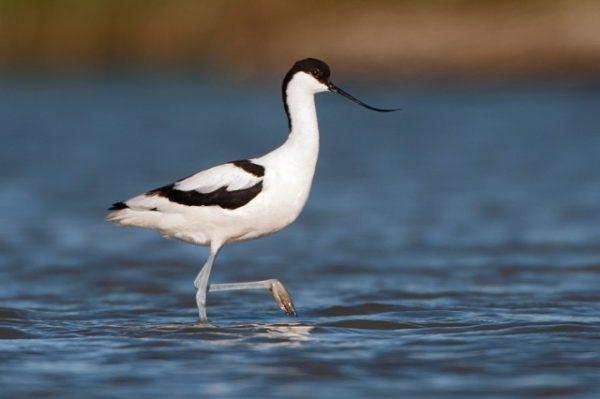 Vogels kijken Puglia