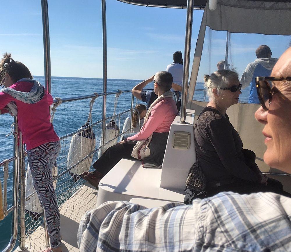 Excursies dolfijnen spotten