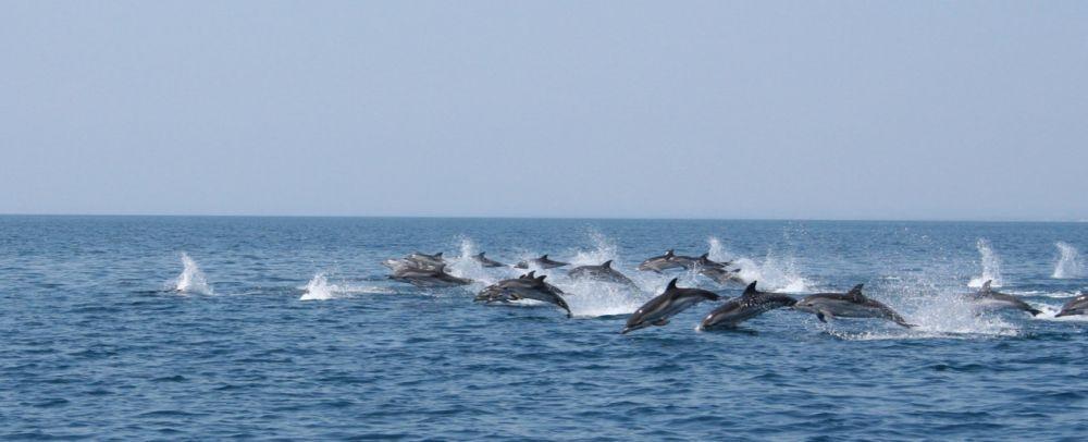 Dolfijnen spotten in Puglia - Echt zo'n geweldige excursie vanuit B&B Villa Lavanda maar 45 min. rijden