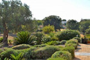 Natuur en rust en een groot deel van Puglia te zien vanuit B&B Villa Lavanda