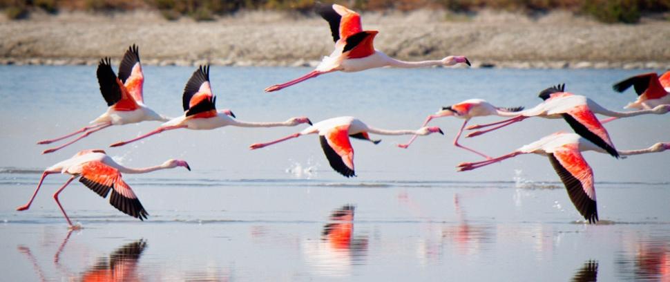 Flamingo's in Puglia vanaf B&B Villa Lavanda