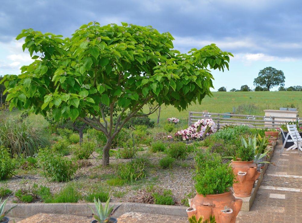 Catalpa en bloeiende cactussen in de tuin van B&B Villa Lavanda