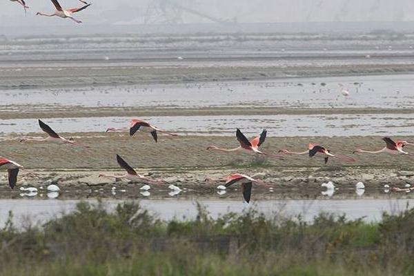 Flamingo's andere watervogels en ook vele roofvogels in Puglia